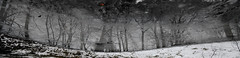 NATURE - the reflected image (rafasmm) Tags: łódź lodz poland polska park źródliska citypark nikon d90 outdoor outdoors monochrome nature citynature reflected image sigma 1020 ex winter day walk