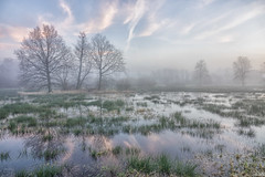 Beautiful Morning (Martine Lambrechts) Tags: beautiful morning nature water landscape winter tree misty mist