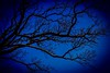 Midnight Blue (jmiller35) Tags: scenic outdoor canon arbol natureza natural nature branches tree bluesky midnight