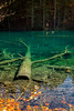 underwatertree (michael.taferner) Tags: canon eos 6d 1635f4 nature water autumn leafs wood low angle lake