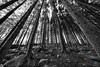 Come this way (pm69photography.uk) Tags: woods forest devon dartmoor southwest sony spooky sonya7rii bw blackandwhite voigtlander voigtlanderheliarf56 voigtlanderheliar10mmf56 wideangle ultrawide distorted distortion moody moor moors