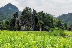 Posvátná skála Zkamenělí bohové (zcesty) Tags: vietnam23 skála pole krajina hory vietnam dosvěta hàgiang vn