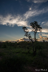 "ZA - Driving home from Sunset drive (Ineound) Tags: southafrica südafrika olympus1250mmf3563 olympusm1250mmf3563 f3563 mzd1250 mzuikodigitaled1250mmf3563ez olympus1250mm 1250 1250mm makro macro olympus micro four thirds mft m43 microfourthirds omd em5 μ43 ""spiegelblickde"" spiegelblickde spiegel blick sunset sonnenuntergang dawn sonne sun"