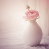 Single one (BirgittaSjostedt- busy with family) Tags: flower vase pot single texture window sliderssunday birgittasjostedt coth5