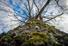 Eiche - Reisnagel (Peter Goll thx for +6.000.000 views) Tags: 2018 dechsendorf erlangen fasching faschingsumzug germany natur eiche oak tree baum stamm sky himmel nikon nikkor d800