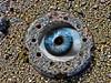 Open (Tobymeg) Tags: rust eye open ball beach shells abstract art panasonic dmcfz72 altered images circle