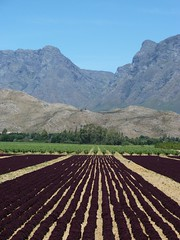 Robertson Valley, Western Cape