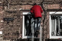 Immer am schaffen... (hobbit68) Tags: red alter mann old man fenster widows 17 jeans spiegelung spiegelt gardine ranke haus house