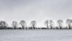 Winter Blues (amber654) Tags: england derbyshire chesterfield winter snow cold trees bleak field quote quotation halborland borland landscape nikon nikond5500 d5500 18140 sky tree mono monochrome bw