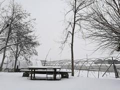 Snow...Turin,Italy. (cetajgentjan) Tags: snow torino nopost huawei summarit p9 winter