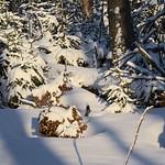Harz-Oderbrueck_e-m10_1012074135 thumbnail