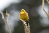 Yellowhammer (Robert Treichler) Tags: tunnels beach dunedin otago new zealand yellow hammer yellowhammer