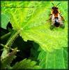 Wildlife (DM Fotografie) Tags: dmfotografie wildlife animals tiere schwan swan eichhörnchen marienkäfer ladybug squirrel