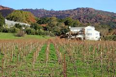 Towards Arrowood Winery (JB by the Sea) Tags: glenellen sonoma sonomacounty california winecountry sonomavalley january2018 imageryestatewinery winery vineyard