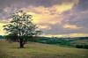 sunset (I.Guidi) Tags: sun sunset sunrise clouds green campo sol paisagem nuvens amanhecer