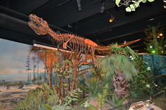 Sauropod 0017 (Tangled Bank) Tags: visiting north carolina museum natural history science paleotology fossils biology