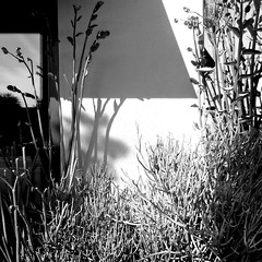 ( That which we do not see ) (Wandering Dom) Tags: plants wall building geometry sunlight shadows time life reality dreams being nothingness earth multiverse urban roam wandering