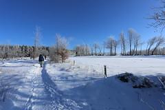 IMG_0226 (rudolf.brinkmoeller) Tags: eifel wandern natur eifelsteig hohesvenn