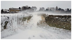 When the wind blows... (mandysp8) Tags: wind driftingsnow winter countryside path uk yorkshire
