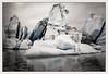 L'Antartique / Antartica - Liu Bolin (christian_lemale) Tags: liu bolin chinois chinese artiste artist