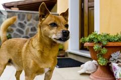 Toby (elenacaldarera) Tags: cane cani dog animals animale animaledomestico sony sonyalphaa6000 sonyalpha