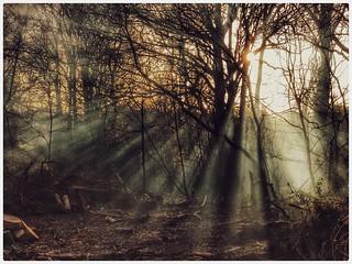 Trees & sun rays