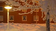 IMG_4345 (Mr Thinktank) Tags: raureif frost
