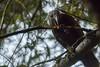 Kaka looking for food (njohn209) Tags: d500 birds nikon nz