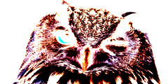owl (julietkitz) Tags: owl bird negative negativespace white brown black blue nature animal wink
