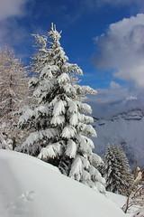 Magic winter (stgio) Tags: winter snow neve landscape mountains dolomiti alps tree albero paesaggio cieloazzurro azzurro