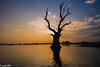 Dead Tamarind tree in the water at U Bein Bridge (Myanmar) (patuffel) Tags: tree water u bein bridge myanmar burma