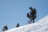 Arbres en montagne (Olivier Brosseau) Tags: flickrnature