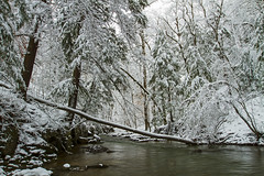 Pure (Matt Champlin) Tags: sunday amazing pure beautiful gorge glen watgerfall snow snowing covered pristine adventure hike hiking greatgully unionsprings flx fingerlakes canon 2018 untouched stream environment cayuga trees forests