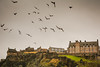 Edinburgh Castle (odarluknar) Tags: edinburgh castle city uk unitedkingdom birds fromourtrip nikon d7100