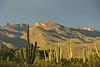 Saguaro Forest (craigsanders429) Tags: mountains arizonamountains cactus saguarocactus latedaylighting latedaylightphotographs arizona sonorandesert tucsonarizona santacatalinamountains