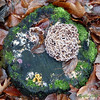 A funghi collection in januari. (Cajaflez) Tags: winter zwammen paddenstoel funghi champignon pilze