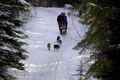 IMG_8295 (zawaski -- Thank you for your visits & comments) Tags: dogsledding fun zawaski©2018 snowwinter maddogsandenglishman boundry ranch ©2019robertzawaski ©2019 robert zawaski ©2019zawaski finephotography photog ambieantlight beauty