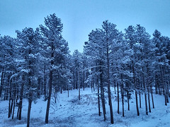 Front Porch at dawn (Sir Realist) Tags: snow trees southdakota blackhills