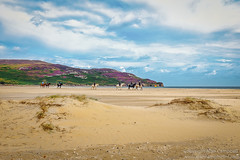 Follow the leader (Alan RW Campbell) Tags: photography alancampbell fineartprints landscape picturesofireland northernireland horse horses donegal beach sand vivid purple blue aqua