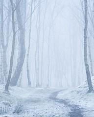 Pathway (Stu Meech) Tags: path mist fog snow bolehill quarry peak district stu meech nikon d750 70200