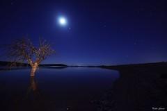 Blue night (Peideluo) Tags: blue night tree moon water starts sky cielo ár árbol