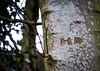 HD (judy dean) Tags: judydean 2018 winter tree hd carving