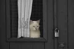 Curiosité (hans pohl) Tags: portugal alentejo beja chats cats doors portes windows fenêtres noiretblanccoloré blackandwhite recoloured