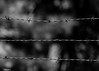 Barbed Wire In Black & White (that_damn_duck) Tags: blackwhite monochrome fence barbedwire sharp bw blackandwhite