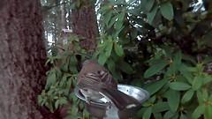 Song Sparrow (Capt. Free) Tags: washington pnw pacificnorthwest birds birdphotobooth songsparrow sparrow westernwashington