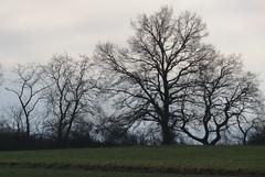 Bäume im Winter (thobern1) Tags: bäume trees winter steinbruch keltern dietlingen enzkreis badenwürttemberg germany
