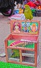 Parrot the astrologer (Rajavelu1) Tags: parrotastrology parrot colours art creative astrology india streetphotography street streetlife colourstreetphotography
