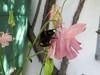 CKuchem-5859 (christine_kuchem) Tags: akelei bienenweide blüte blüten garten hummel insekten nahrung natur naturgarten nektar pflanze privatgarten selbstaussaat sommer wildpflanze hell naturnah natürlich rosa weis wild