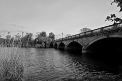 Hyde Park (galoware) Tags: england uk unitedkingdom london gbr greatbritain a6000 monochrome bw byn
