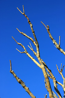 Bare Branches Pointing to a Blue Sky